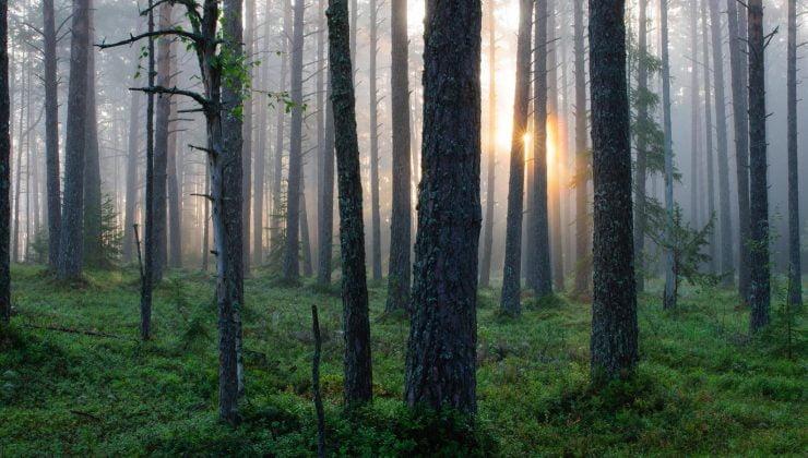 Finlandiya'da böğürtlen toplayan insanlar kayboldu