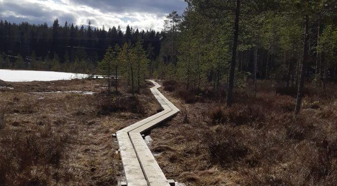 Ormanlarda kaybolanların sayısı artıyor