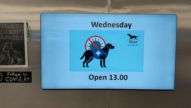 Koronavirüsü tespit eden köpeklerin durumu ne olacak?