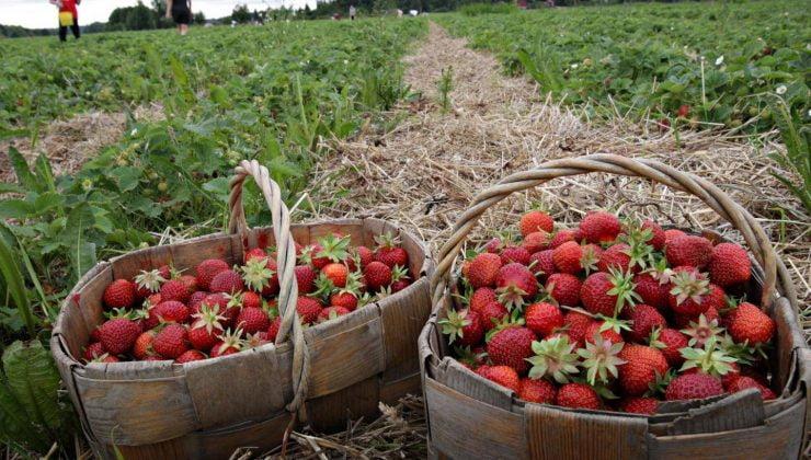 Mülteciler oturum almadan tarım işinde çalışabilecek
