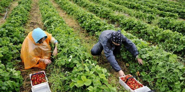 Ukrayna, Finlandiya'ya Tarım İşçisi Vermiyor
