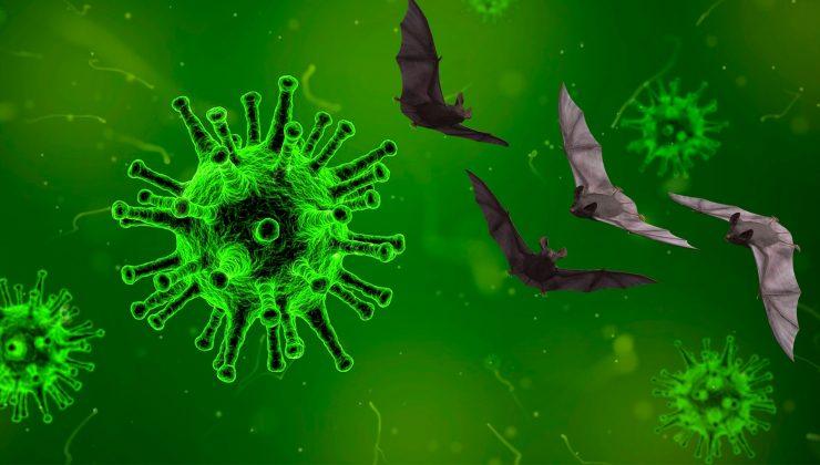 Finlandiya'da koronavirüs salgınında son durum (03.02.2021)
