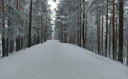 Kar yağışı Lapland'ı etkisi altına aldı